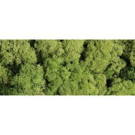 Mech Chrobotek Jasny Zielony 125g