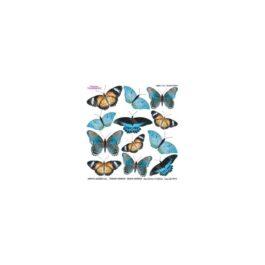 Folia do sospeso Motyle 3D
