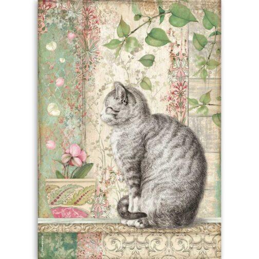 papier-ryzowy-kot